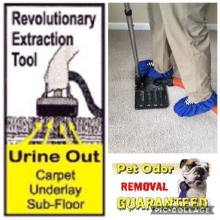 29 99 Room Online Special Carpet Cleaning In Charlotte